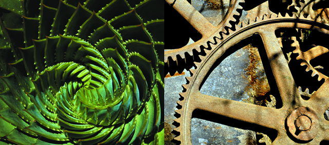 ferns and gears